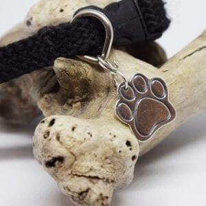 hundtass i hundhalsband på en trädgren